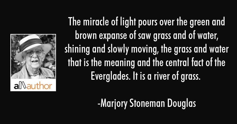 The miracle of light pours over the green and brown expanse of saw grass and of water, shining and... - Marjory Stoneman Douglas Quote